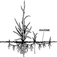 Rhizome-featured-image