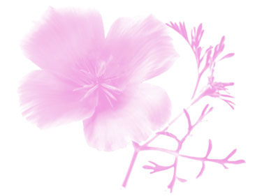 Flower-School