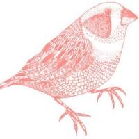 birdingws